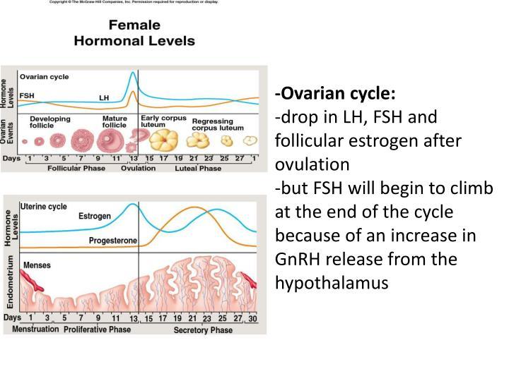 -Ovarian cycle: