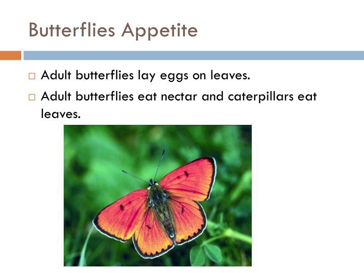 Butterflies Appetite