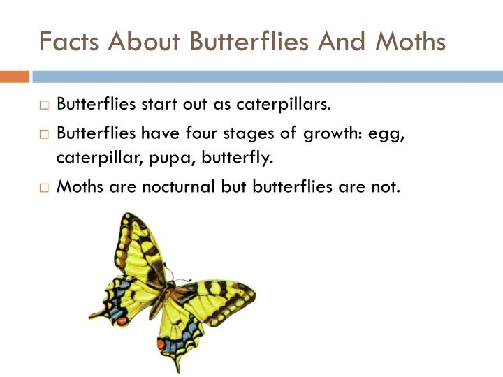 Facts About Butterflies And Moths