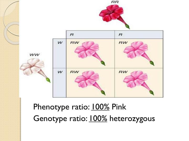 Phenotype ratio: