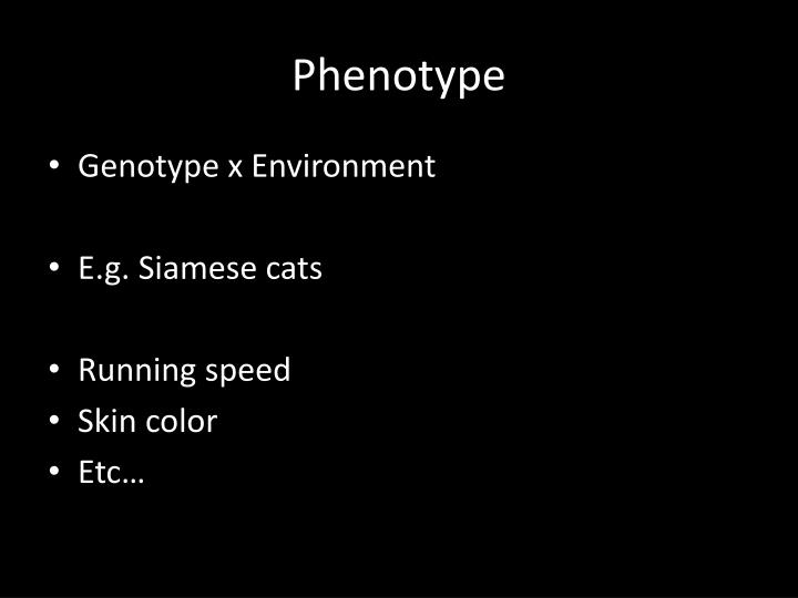 Phenotype