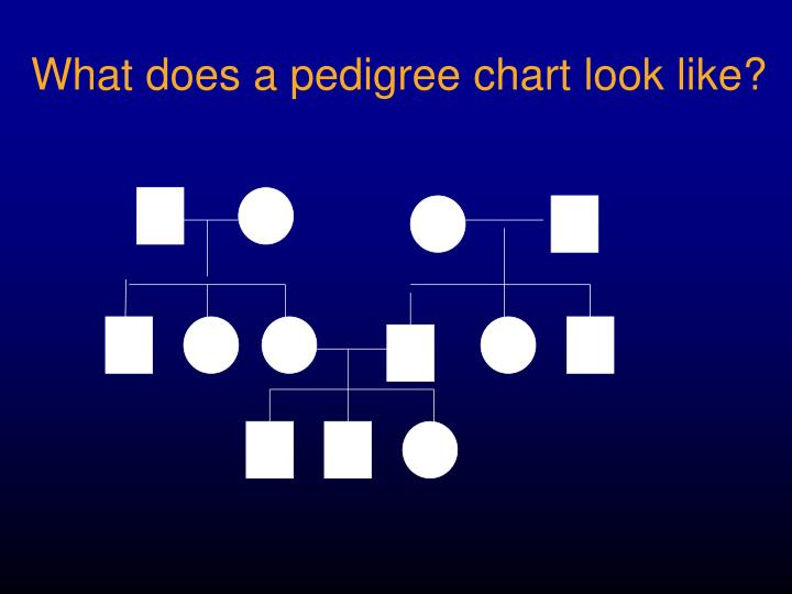 What does a pedigree chart look like?