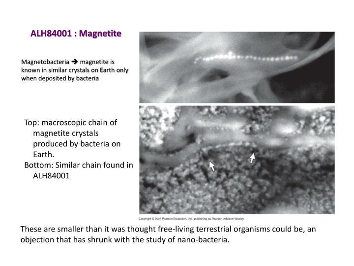 ALH84001 : Magnetite