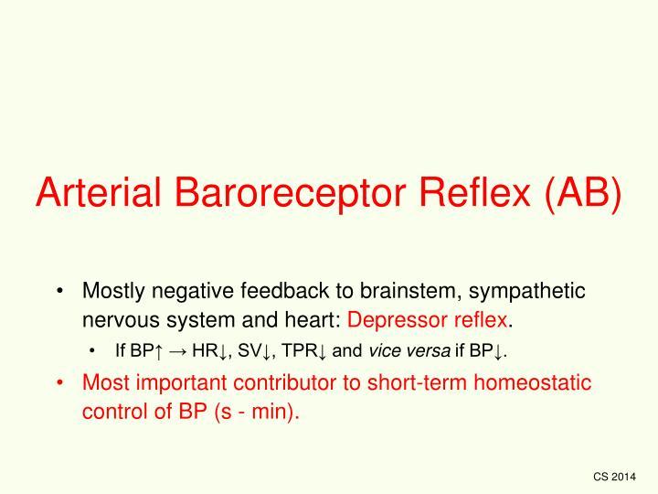 Arterial Baroreceptor Reflex (AB)