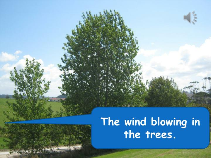 The wind blowing in the trees.