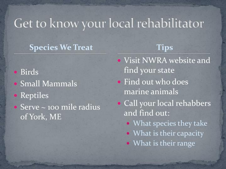 Get to know your local rehabilitator