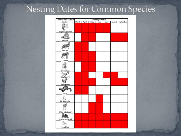 Nesting Dates for Common Species