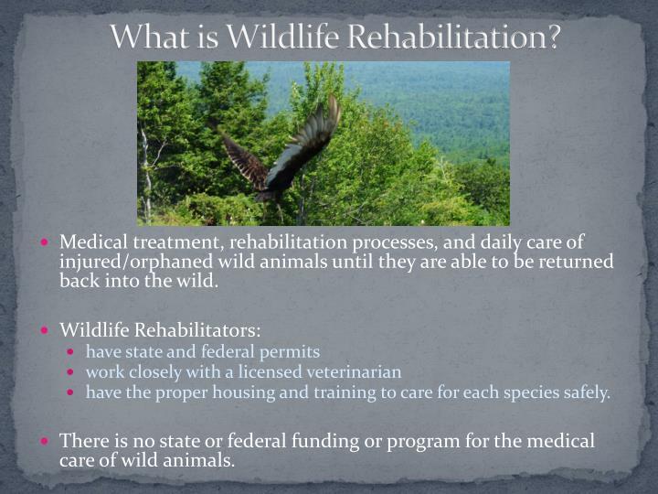 What is Wildlife Rehabilitation?