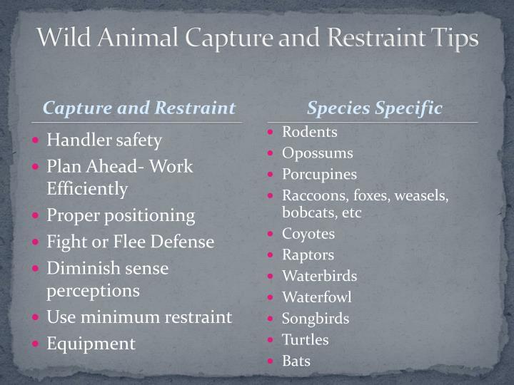 Wild Animal Capture and Restraint Tips
