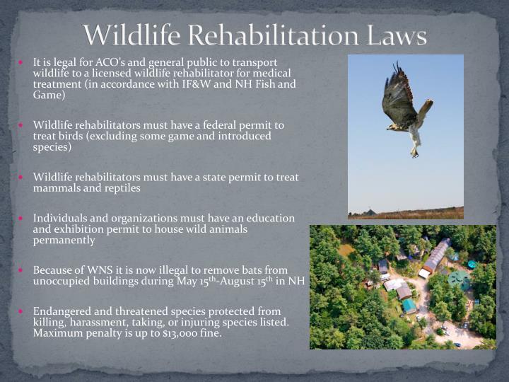 Wildlife Rehabilitation Laws