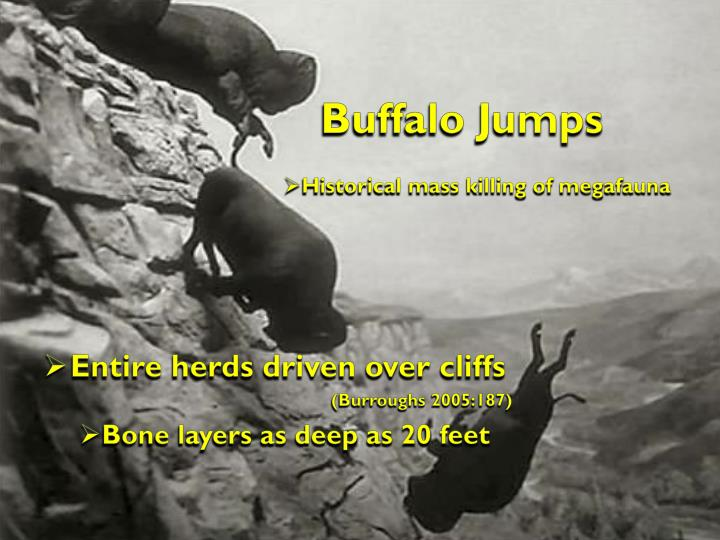Buffalo Jumps