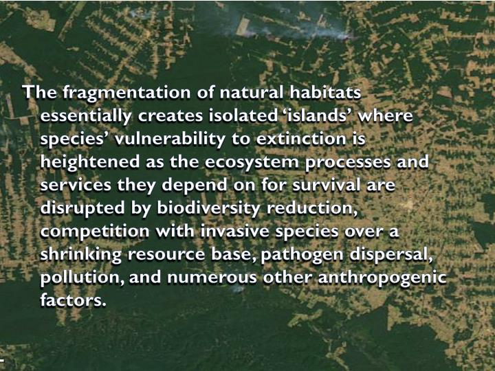 The fragmentation of natural habitats essentially creates isolated 'islands' where species' vulnerability to extinction is heightened as the ecosystem processes and services they depend on for survival are disrupted by biodiversity reduction, competition with invasive species over a shrinking resource base, pathogen dispersal, pollution, and numerous other anthropogenic factors.