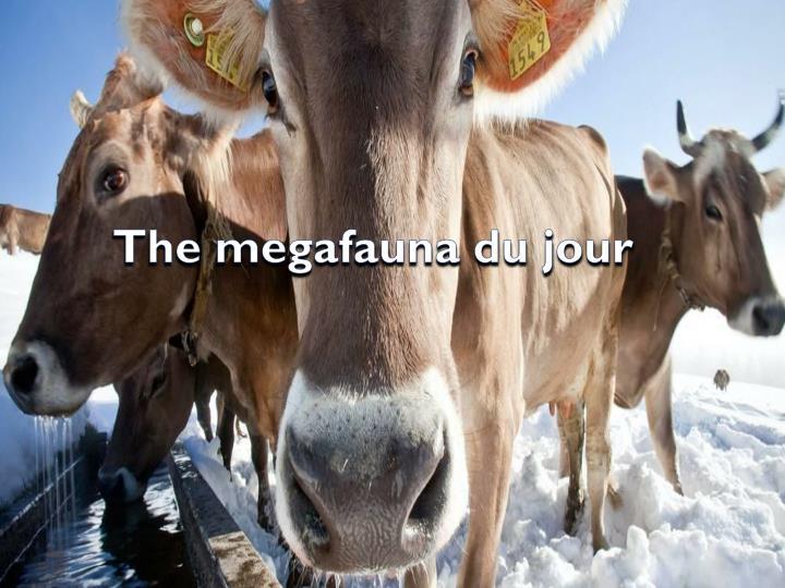 The megafauna du jour