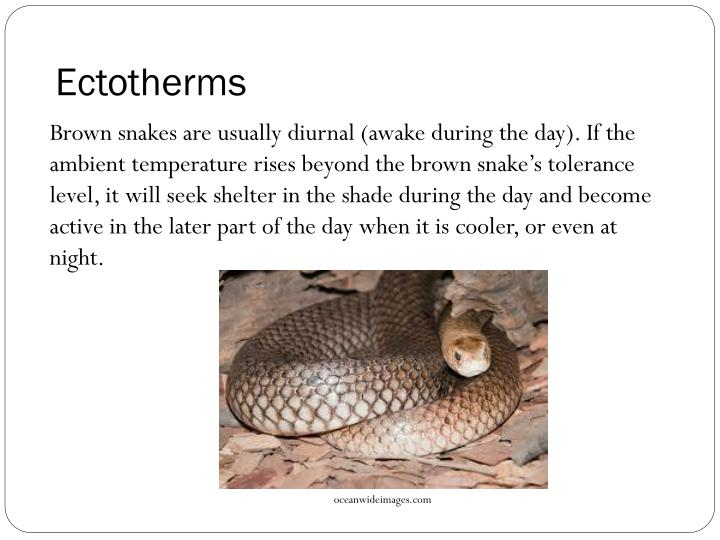 Ectotherms