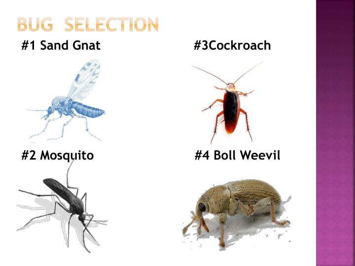 Bug selection