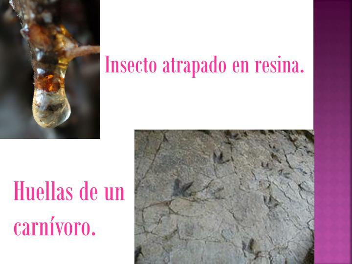 Insecto atrapado en resina.