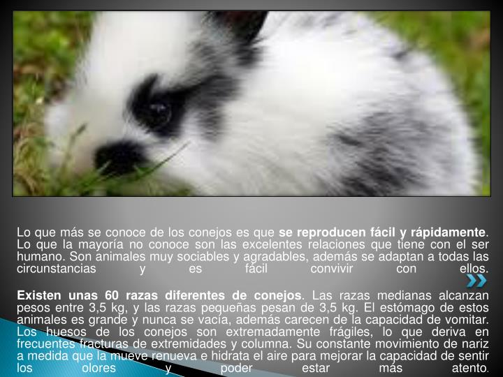 Lo que más se conoce de los conejos es que