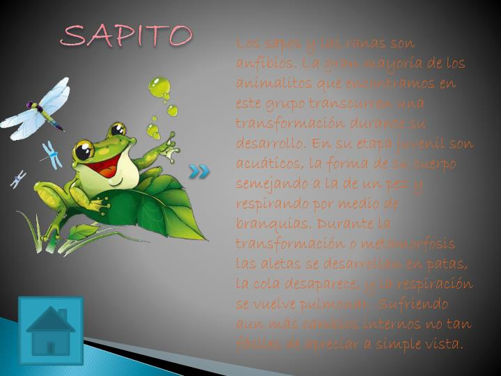 SAPITO