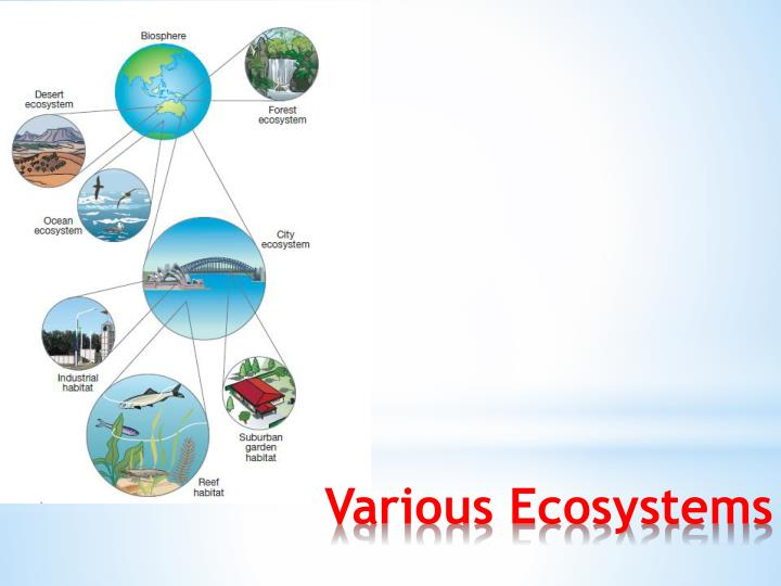 Various Ecosystems