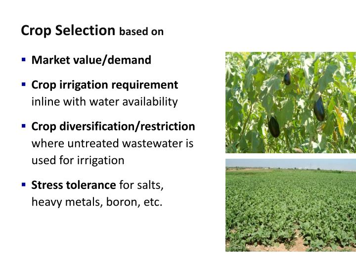 Crop Selection
