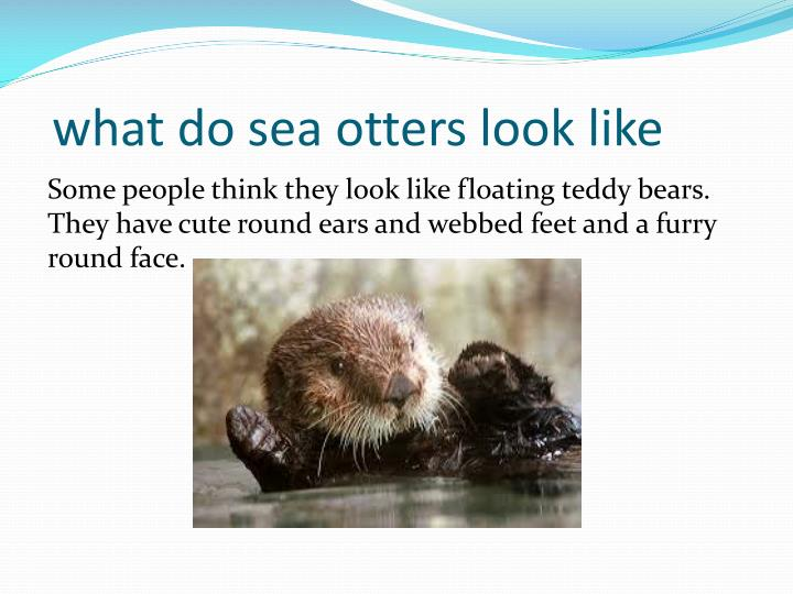 what do sea otters look like
