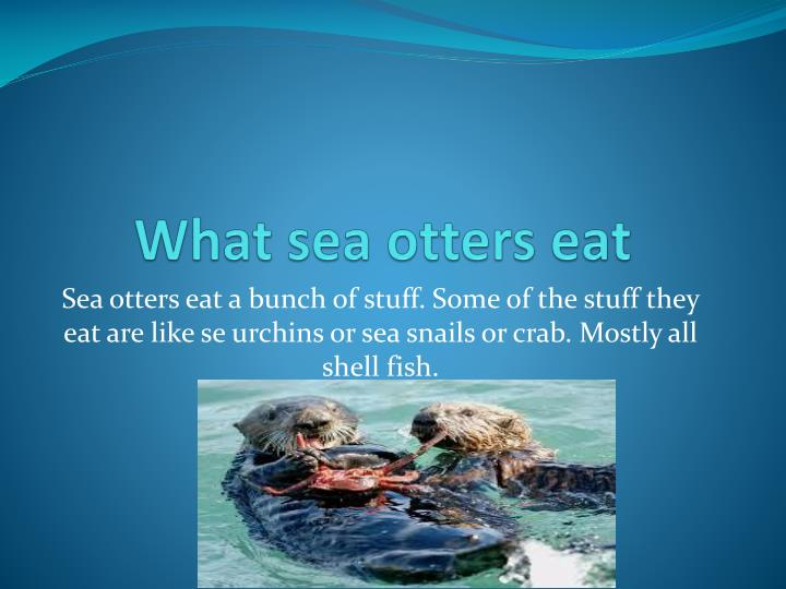 What sea otters eat