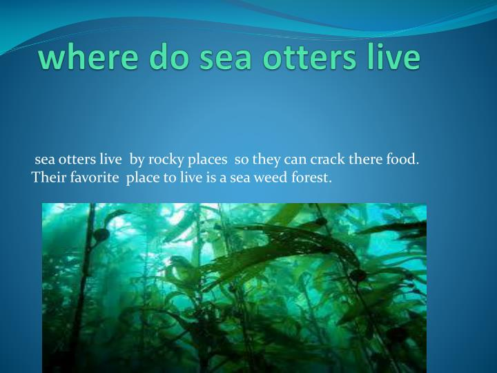 where do sea otters live