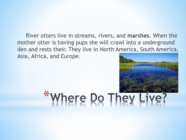 River otters live in streams, rivers, and
