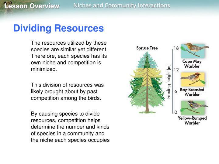Dividing Resources