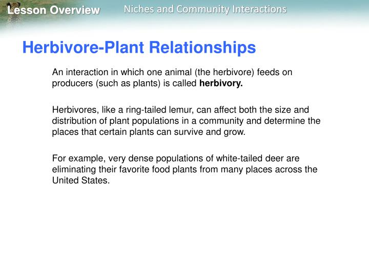 Herbivore-Plant Relationships