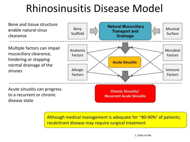 Rhinosinusitis Disease Model