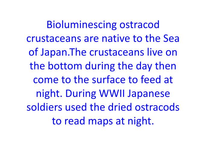 Bioluminescing ostracod crustaceans are native to the Sea of Japan.The crustaceans live on the bottom during the day then come to the surface to feed at night. During WWII Japanese soldiers used the dried ostracods to read maps at night.