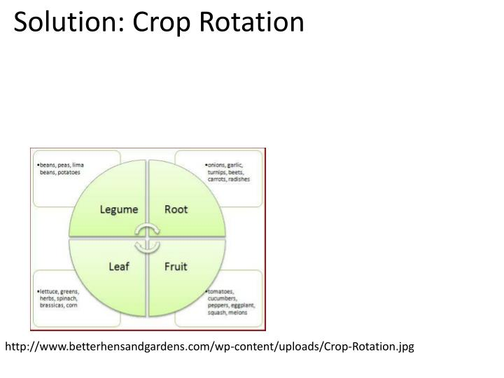 Solution: Crop Rotation