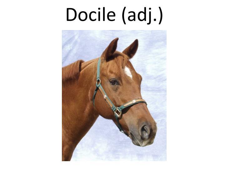 Docile (adj.)