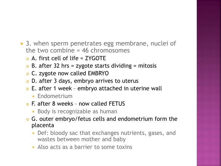 3. when sperm penetrates egg membrane, nuclei of the two combine = 46 chromosomes