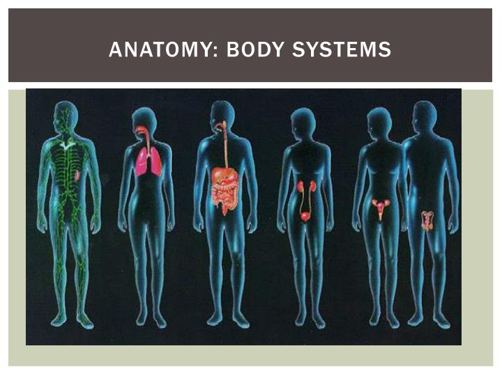 Anatomy: Body Systems