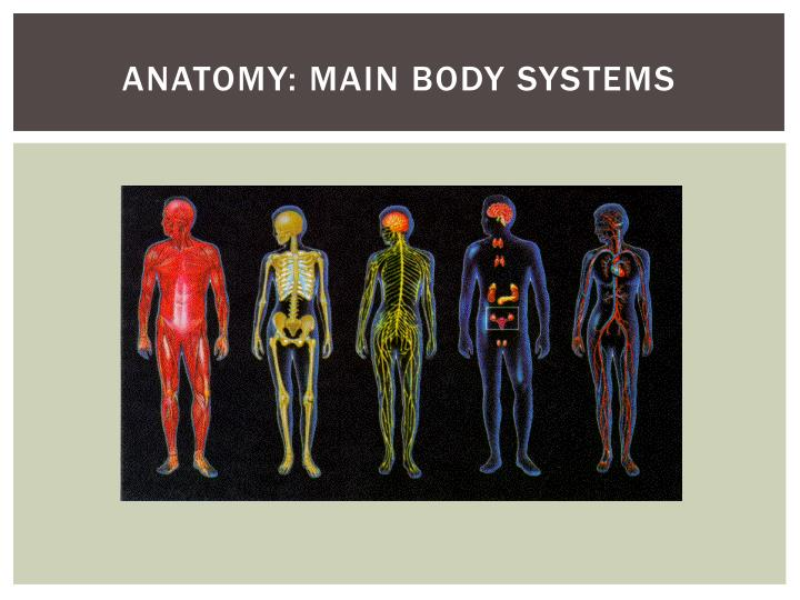 Anatomy: Main body systems