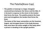 the patella knee cap