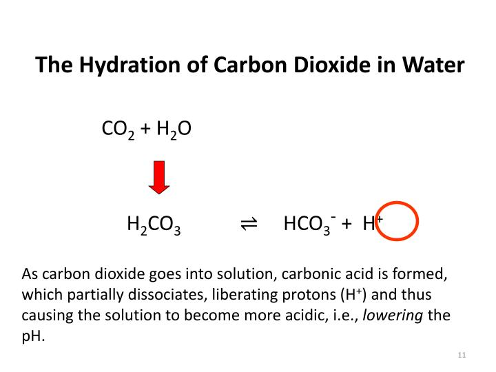 The Hydration of Carbon Dioxide in Water
