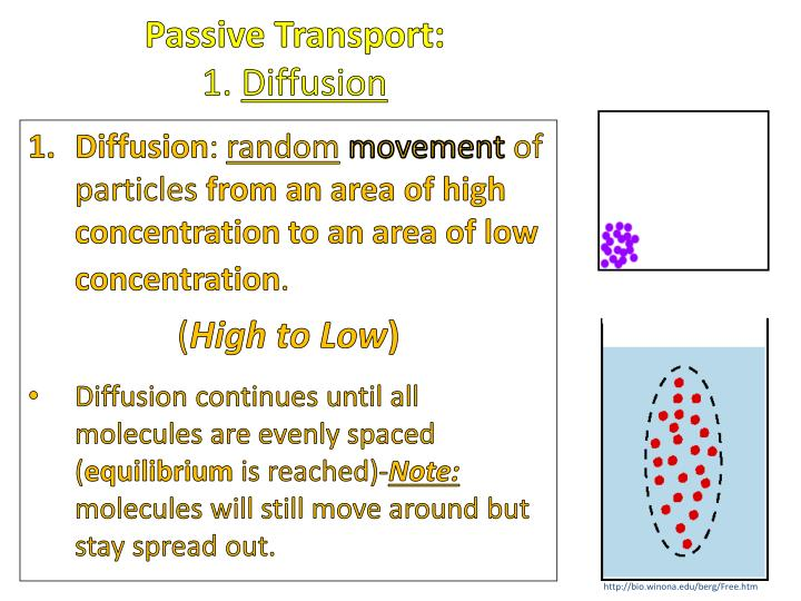 Passive Transport: