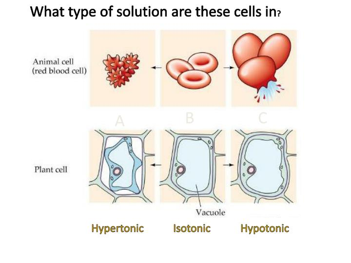 What type of solution are these cells in