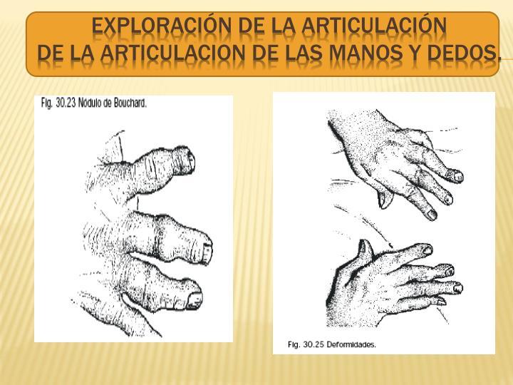 Exploración de la articulación