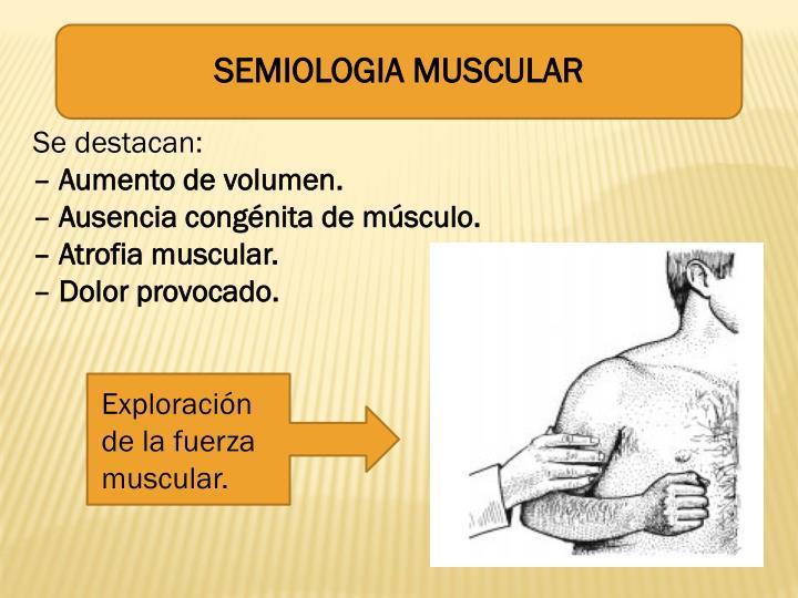 SEMIOLOGIA MUSCULAR