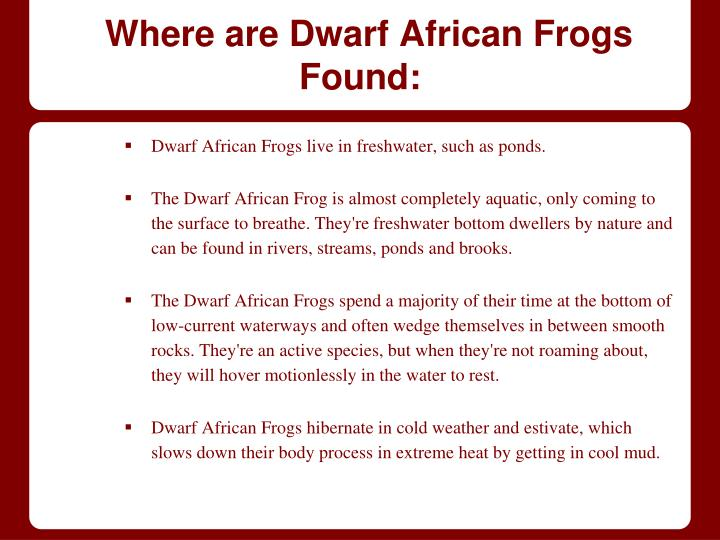 Where are Dwarf African Frogs Found: