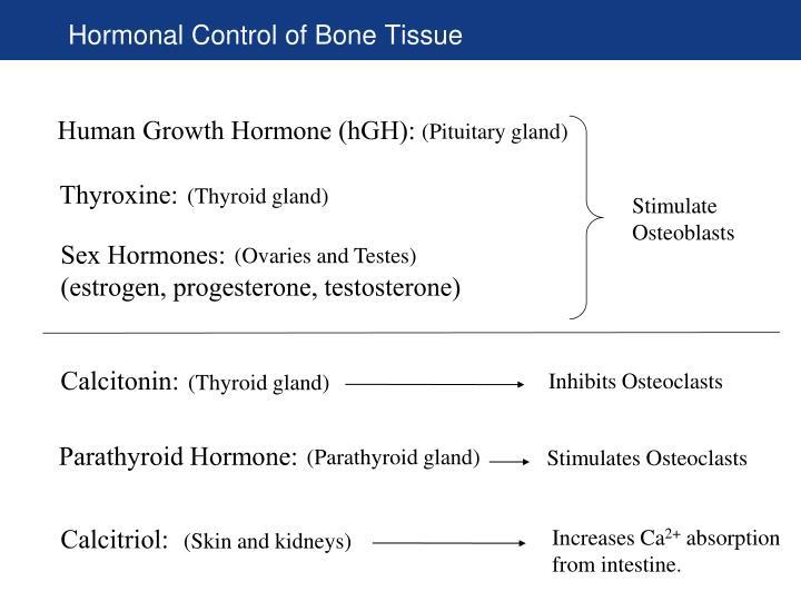 Hormonal Control of Bone Tissue