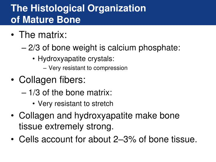 The Histological Organization