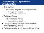 the histological organization of mature bone