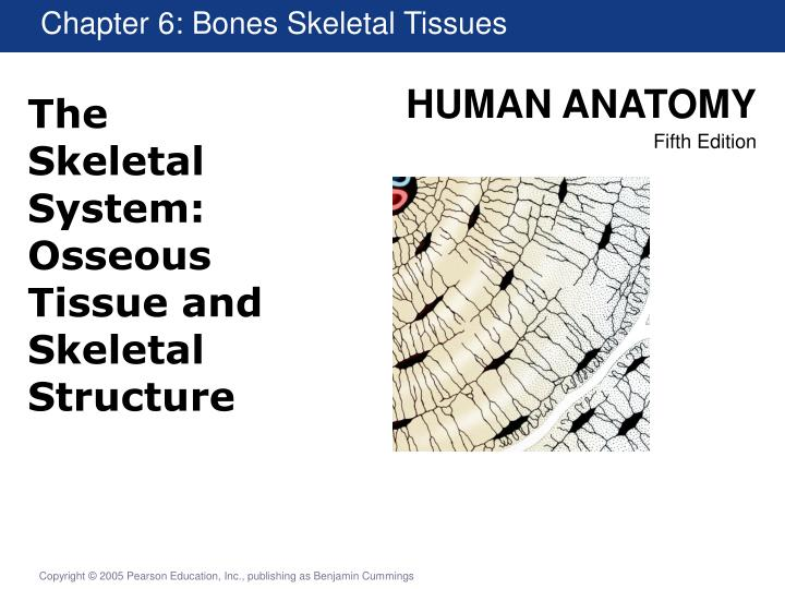 The skeletal system osseous tissue and skeletal structure