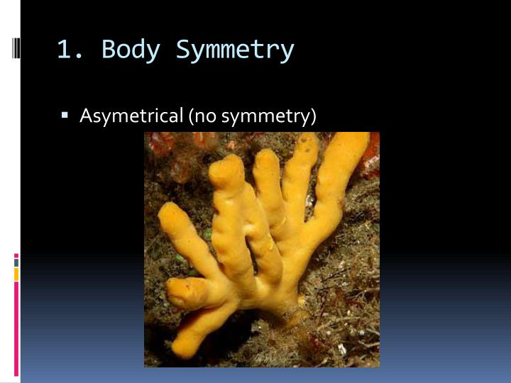 1. Body Symmetry