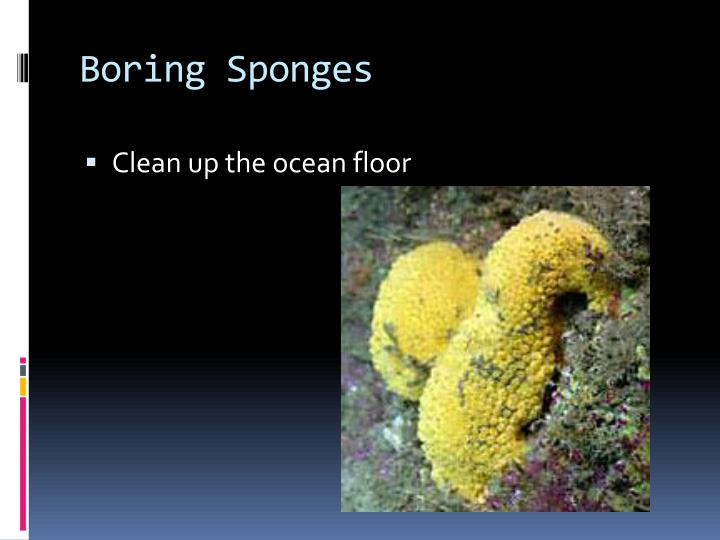 Boring Sponges